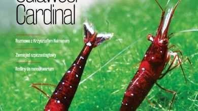 Okładka Magazyn Akwarium czasopismo 4/2017