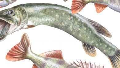 Photo of Biotop polskich wód w akwarium