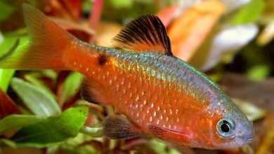Obsada ryb z różnych biotopów. Porady akwarystyczne