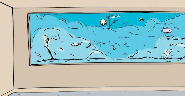 duże akwarium porady akwarystyczne