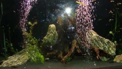akwarium porady