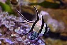 Zakładanie akwarium morskiego