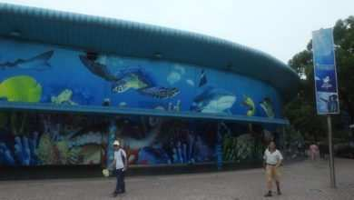 Photo of Krzysztof Pająk: Changfeng Ocean World