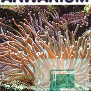 Okładka Magazyn Akwarium czasopismo 10/2005