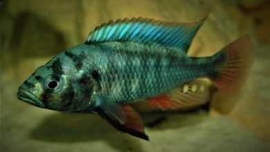 Photo of Piotr Stolc: Fishroom – akwarystyczna ostoja