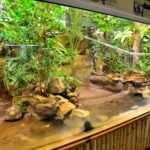 Terrarium żółwiowe z mrówkami grzybiarkami. Fot. Paweł Czapczyk. Magazyn Akwarium czasopismo