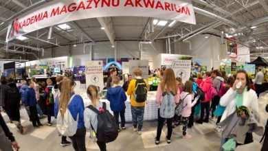 Photo of Przygotowania do Akademii Magazynu Akwarium 2019