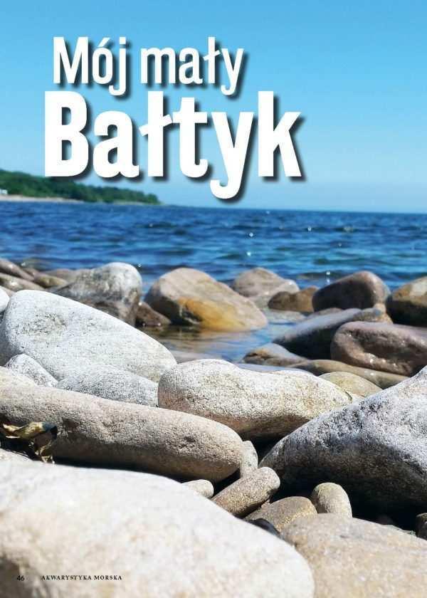 akwarium bałtyckie