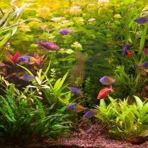 Akwarium towarzyskie i gatunkowe