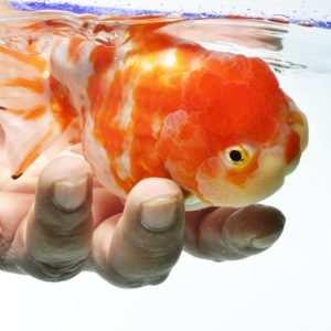 ... Choroby i szkodniki w akwarium
