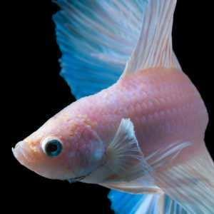 Ryby Azji