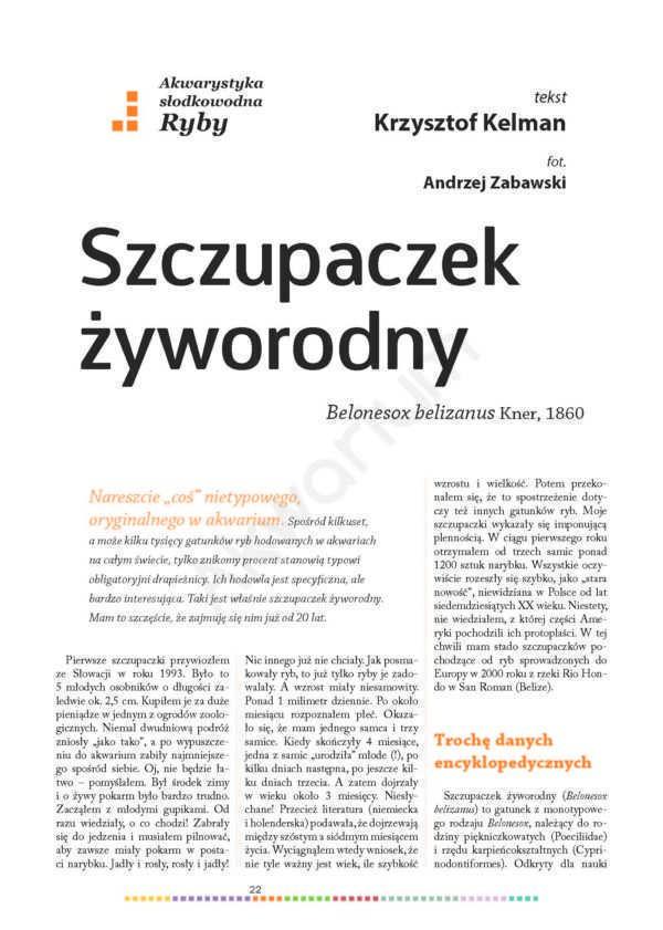 szczupaczek żyworodny Magazyn Akwarium czasopismo