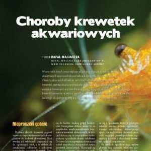 choroby krewetek akwariowych