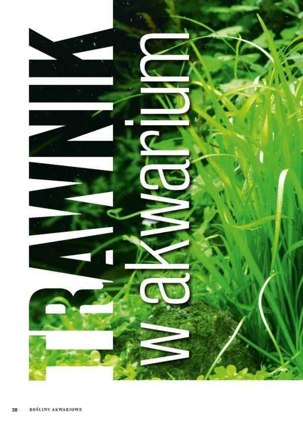 rośliny trawnikowe
