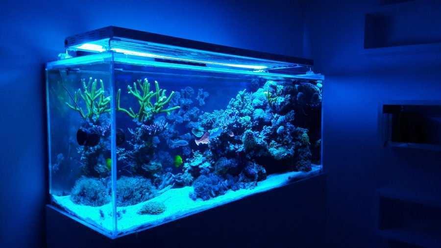 Adam Golik Morskie akwaria dekoracyjne