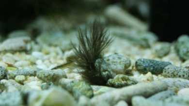 Photo of Zwalczanie inwazji krasnorostów i ślimaków