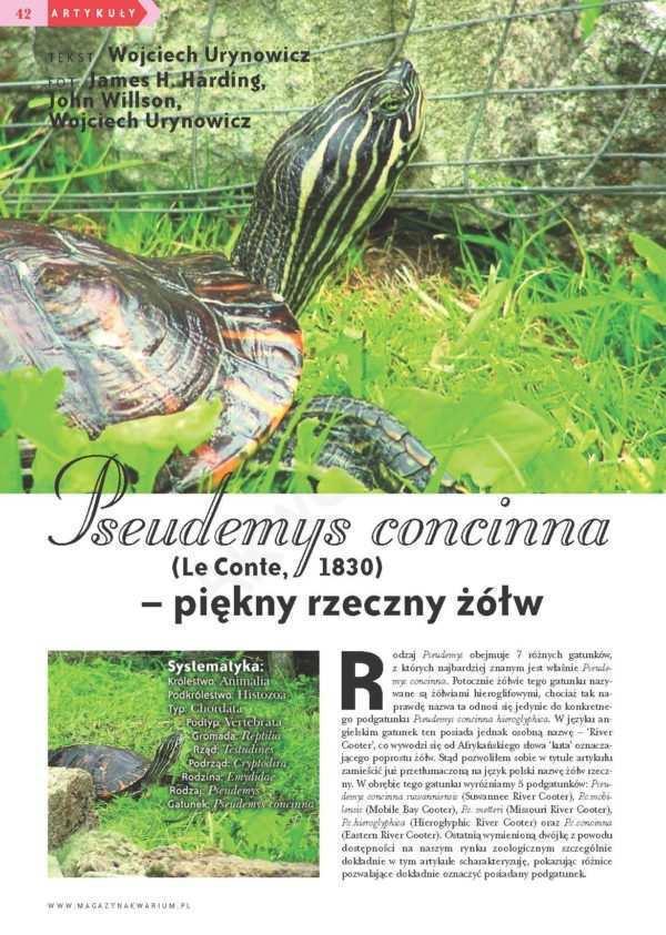 Pseudemys concinna, żółw rzeczny