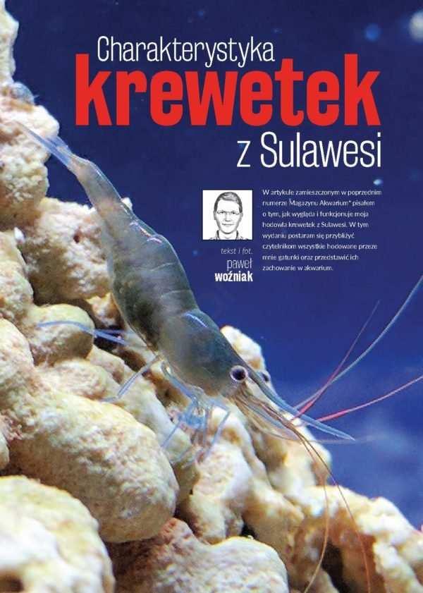 krewetki Sulawesi