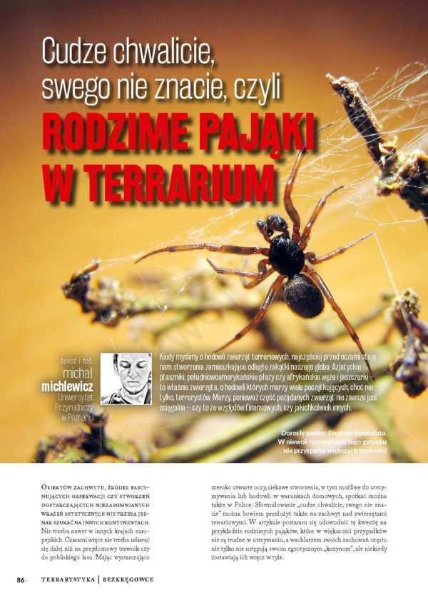 pająki krajowe
