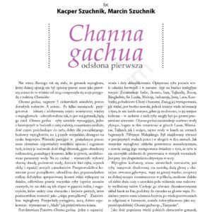 Channa gachua