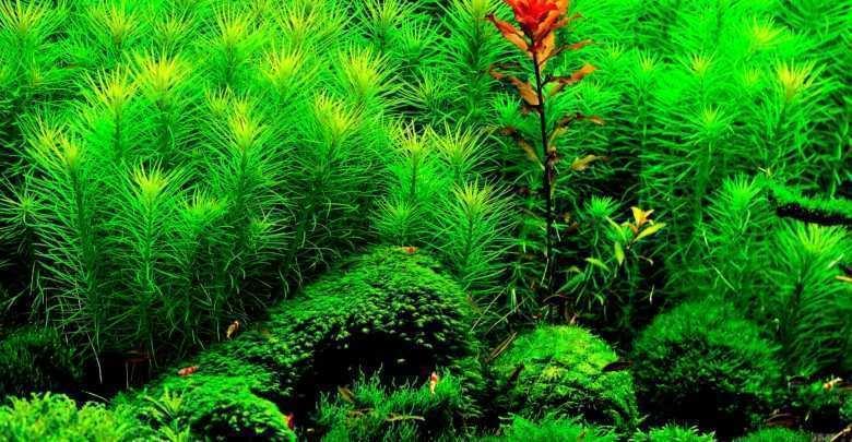 Akwarystyka. Rośliny w akwarium