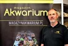 Stephen Elliott Wywiad Magazynu Akwarium