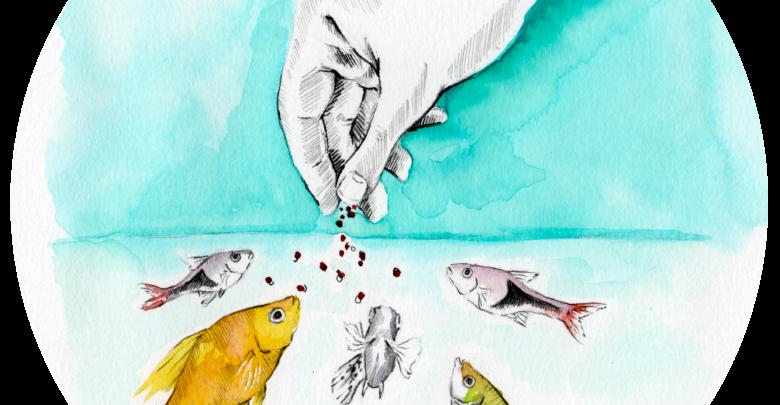 karmienie ryb