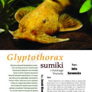 Glyptothorax