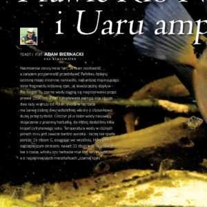 Uaru amphiacanthoides