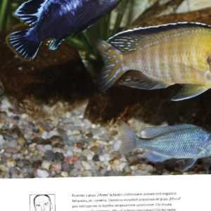 ryby Malawi