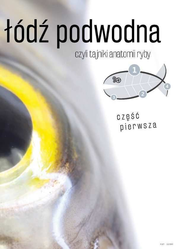 anatomia ryb