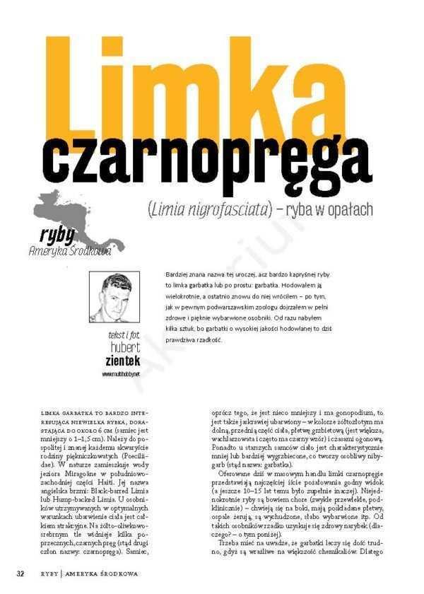 Limia nigrofasciata