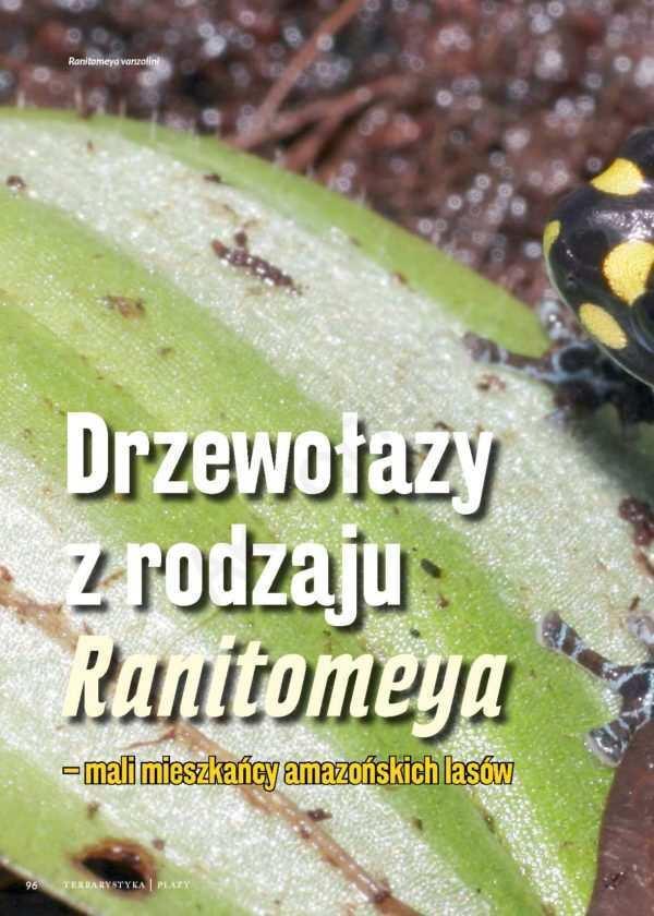 Ranitomeya