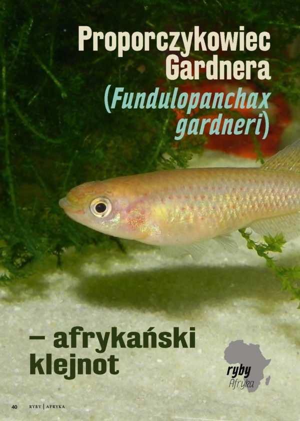 proporczykowiec Gardnera