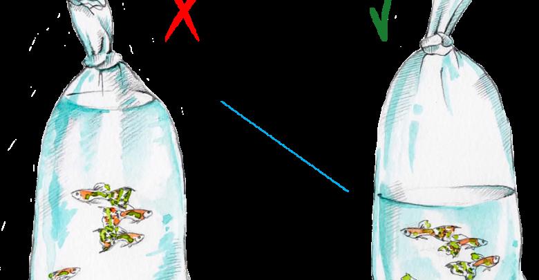 aklimatyzacja ryb