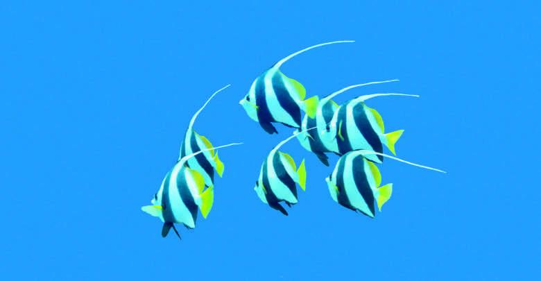 kwarantanna ryb morskich