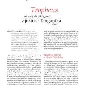 Tropheus