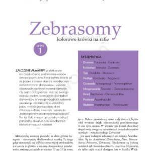 zebrasomy