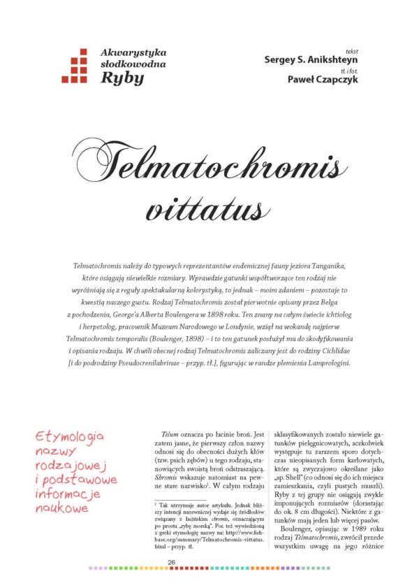 Telmatochromis vittatus