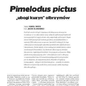 Pimelodus pictus
