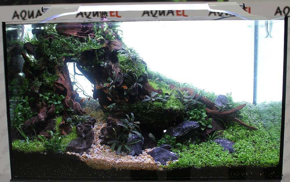 Aquel Aquarium Contest