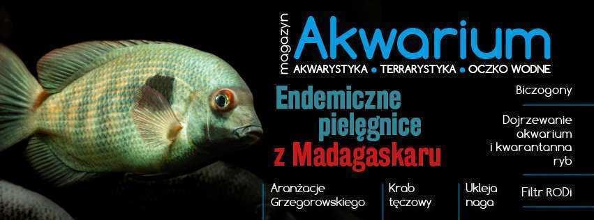 Magazyn Akwarium czasopismo 3/2019