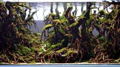 projektowanie akwarium roślinnego