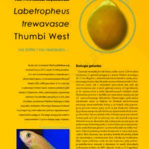 Labeotropheus