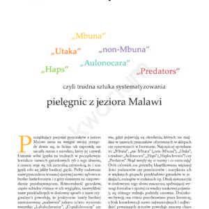 Pielęgnice Malawi