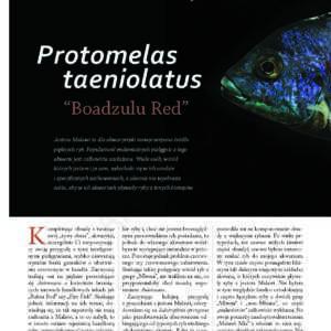 Protomelas