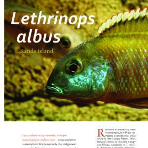 Lethrinops