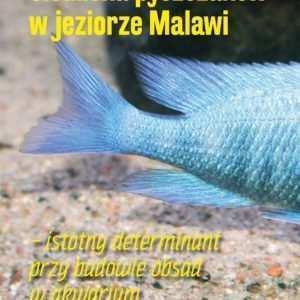 Malawi akwarium