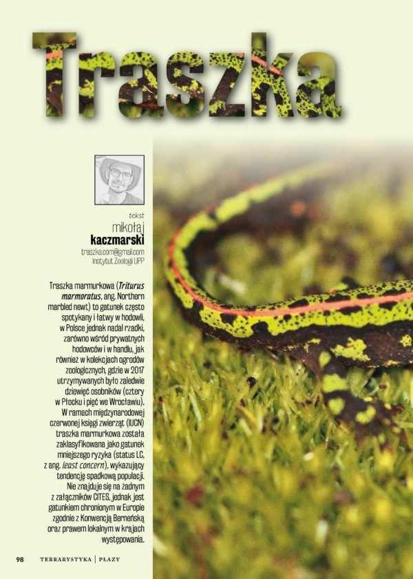 Traszka marmurkowa (Triturus marmoratus)