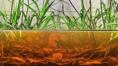 Photo of Polish Biotope Contest 2019 – top 6